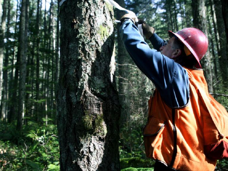 Australia Forestry safety | New Zealand